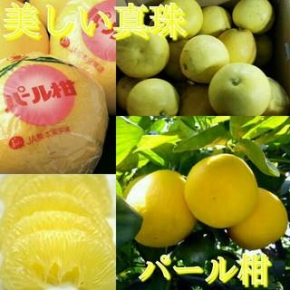 熊本特産甘味さっぱりパール柑約10kg 送料無料0(フルーツ)