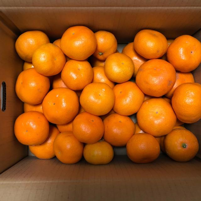 濃厚! 青島みかん 3kg 食品/飲料/酒の食品(フルーツ)の商品写真