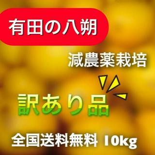 【有田の八朔】減農薬10kgモリ・カケ・スパ・ブラックボックス(フルーツ)