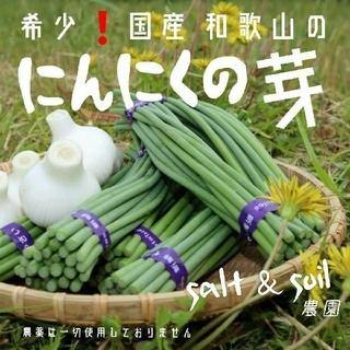 ★収穫待ち3月中旬~★ 希少 入手困難❗国産 和歌山 にんにくの芽 450グラム(野菜)