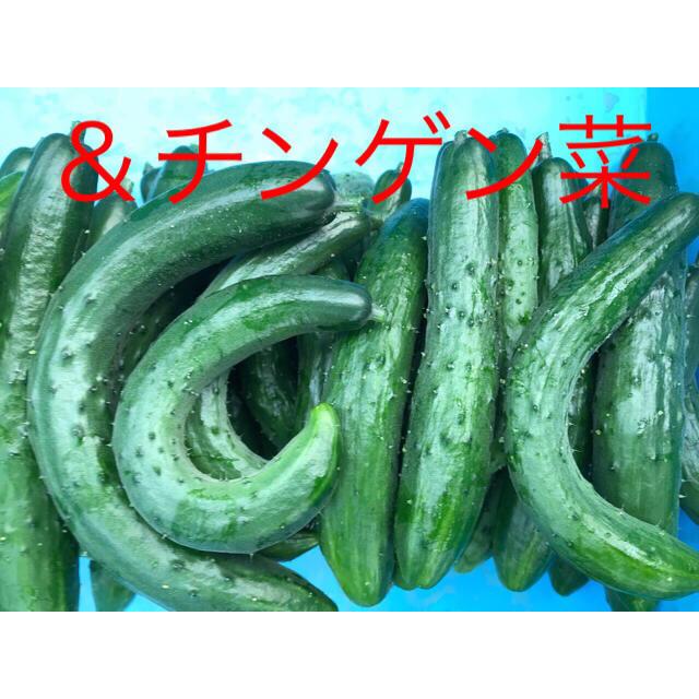 ひろみちん様専用 食品/飲料/酒の食品(野菜)の商品写真