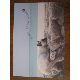 ねこ休み展 オリジナルポストカード ▽(印刷物)