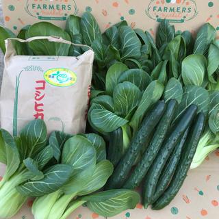 コシヒカリ&キュウリ&チンゲン菜(野菜)