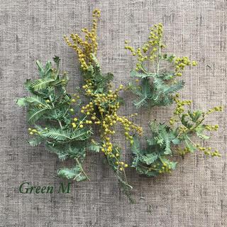 春色ミモザとリーフドライ少量セット✳︎送料無料 商品80(ドライフラワー)