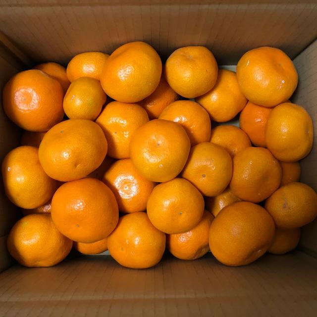 濃厚!青島みかん 3kg 食品/飲料/酒の食品(フルーツ)の商品写真