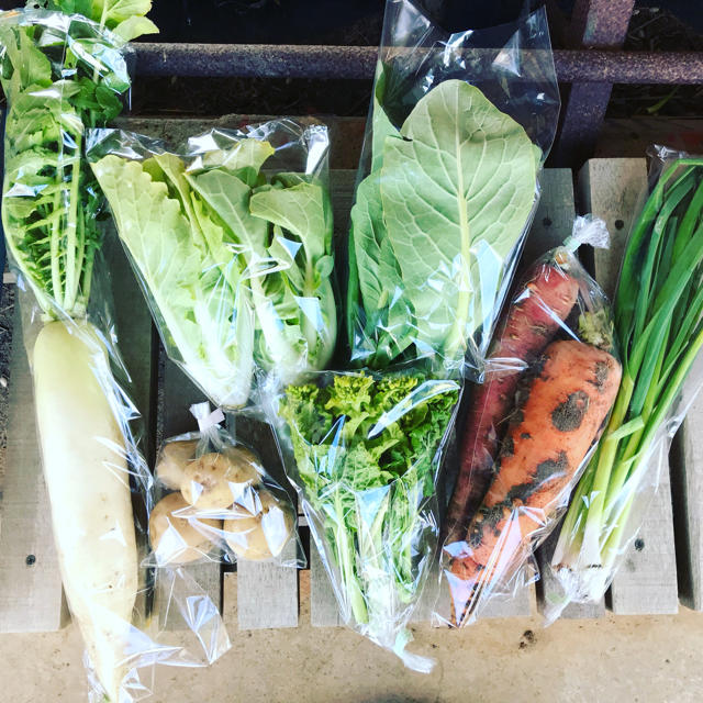 【piiko6280様専用】渥美半島から直送!旬彩野菜バスケット 食品/飲料/酒の食品(野菜)の商品写真