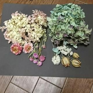 ドライフラワー 花材☆アジサイ お値下げ(ドライフラワー)
