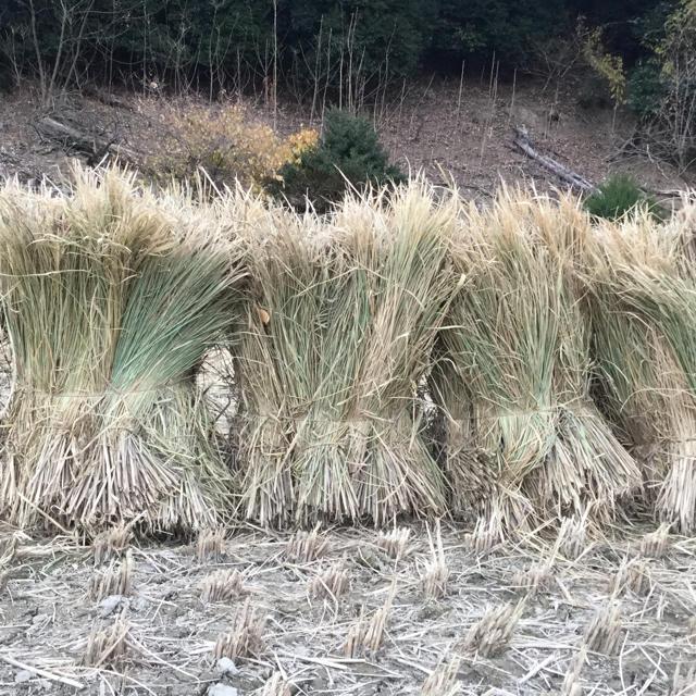 うさぎさんも大好き♪天日干し稲わら少量パック(200g) その他のペット用品(小動物)の商品写真