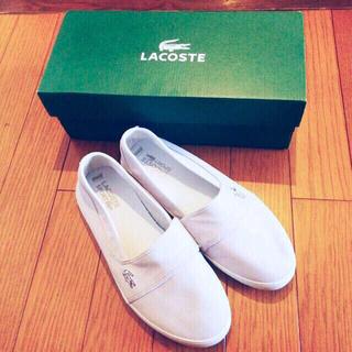 ラコステ(LACOSTE)のLACOSTE 靴(スニーカー)
