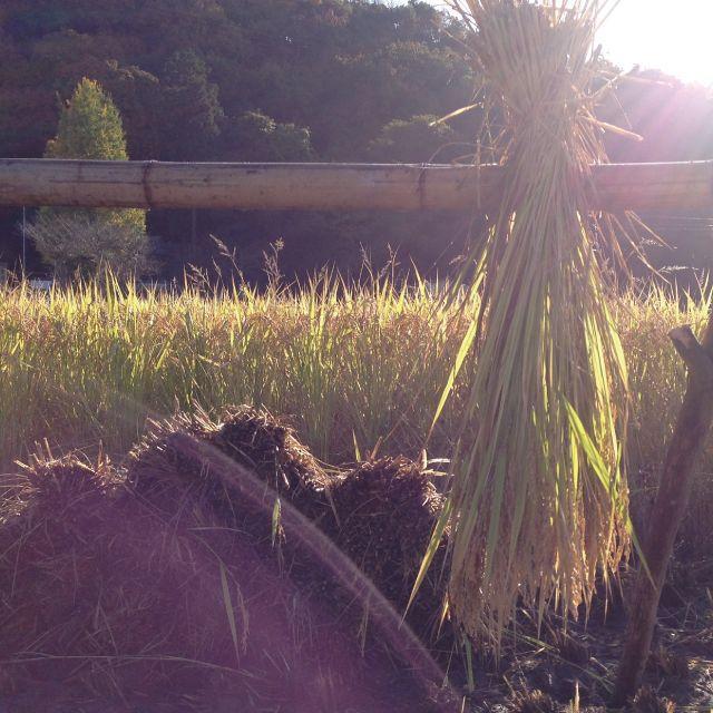【アヒルのお米・はざ掛け】平成29年度岡山県備前市産10㎏(玄米) 食品/飲料/酒の食品(米/穀物)の商品写真