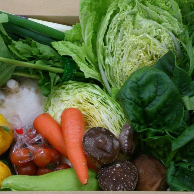 ☆わくわく80サイズ☆岡山産 新鮮野菜 食品/飲料/酒の食品(その他)の商品写真