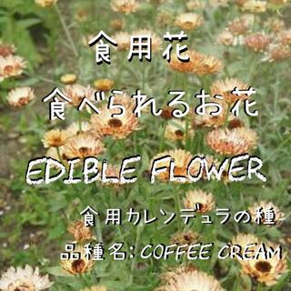 エディブルフラワーの種 食用カレンデュラ コーヒークリーム(野菜)