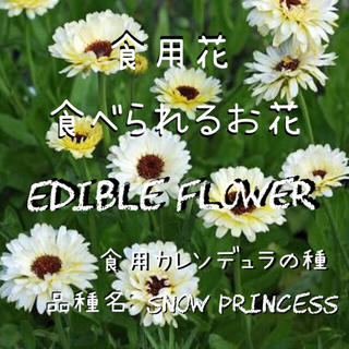 エディブルフラワーの種 食用カレンデュラ スノウプリンセス(野菜)