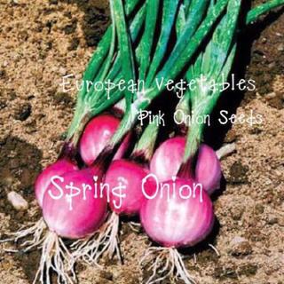 ピンクオニオンブランシュの種(野菜)