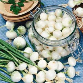 ホワイトオニオンブランシュの種(野菜)