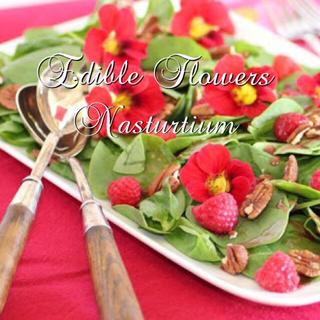 エディブルフラワーの種 ナスタチューム チェリーローズ(野菜)