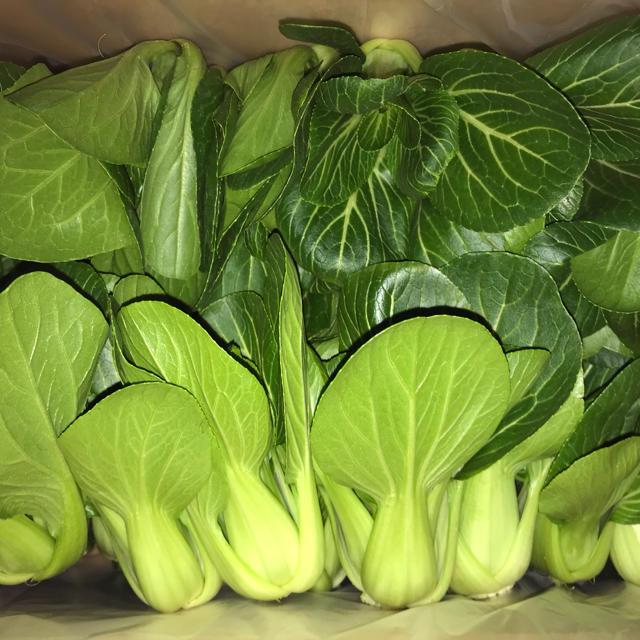チンゲン菜と規格外品キュウリ 食品/飲料/酒の食品(野菜)の商品写真