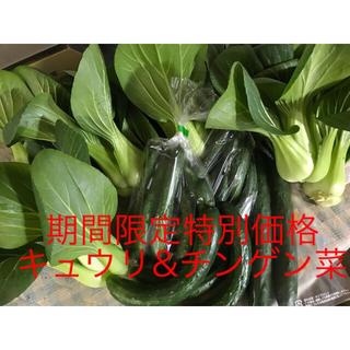 チンゲン菜と規格外品キュウリ(野菜)