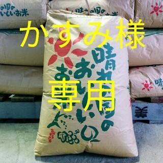 コシヒカリ精米(米/穀物)