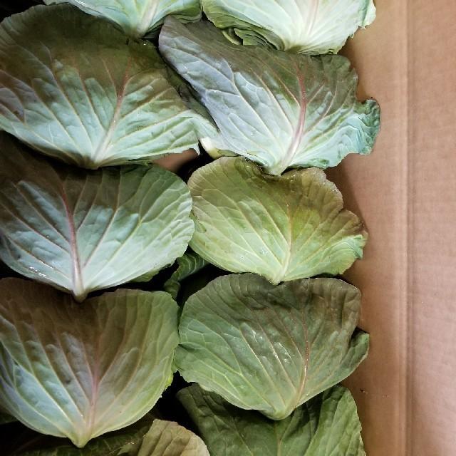 ゆうゆう様専用キャベツ 食品/飲料/酒の食品(野菜)の商品写真