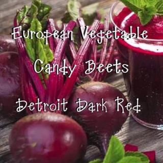 ビーツの種 デトロイト(野菜)