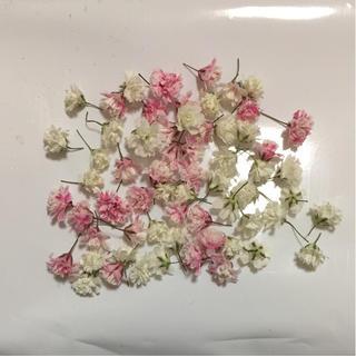 かすみ草 ドライフラワー ピンク*ホワイト(ドライフラワー)