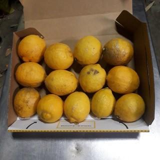 国産無農薬 レモン 1kg  送料無料(フルーツ)