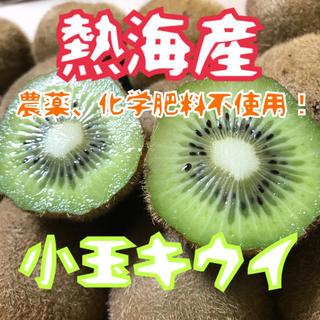 【熱海産♨無農薬】完熟小玉キウイinコンパクトボックス(フルーツ)