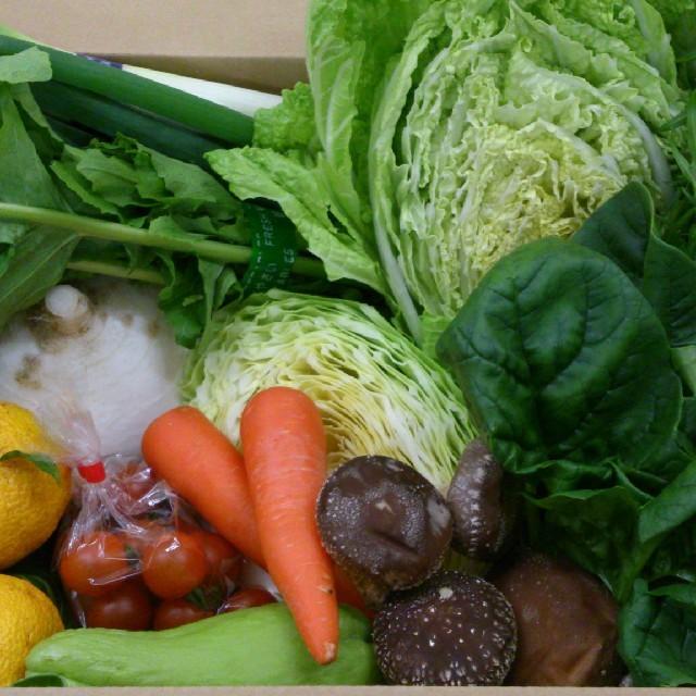 ☆こじ様 専用ページ☆ 食品/飲料/酒の食品(野菜)の商品写真