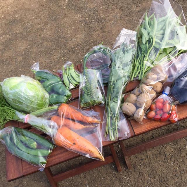 農薬・肥料不使用の野菜セットM「8〜10品」ラクマ特別版 食品/飲料/酒の食品(野菜)の商品写真