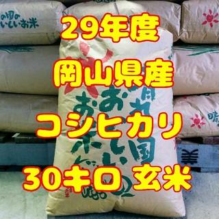 新米コシヒカリ30㌔(米/穀物)