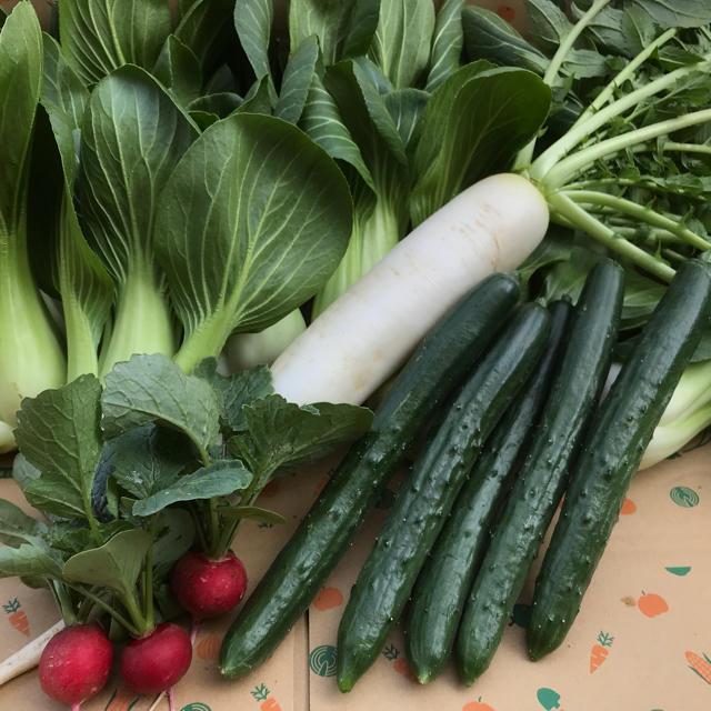 ハートキュウリ入り野菜セット 食品/飲料/酒の食品(野菜)の商品写真