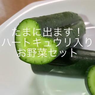 ハートキュウリ入り野菜セット(野菜)