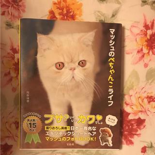 マッシュの本  専用☆(その他)