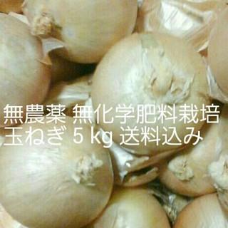 大山山麓 無農薬無化学肥料栽培玉ねぎ 5kg 送料込(野菜)