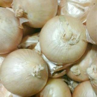 大山山麓 無農薬 無化学肥料 特別栽培玉ねぎ2kg 送料込(野菜)