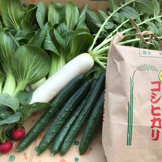 コシヒカリとお野菜セット(野菜)