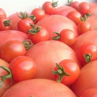 オマケ付【訳あり】ソムリトマト4㎏(16玉~30玉)(野菜)