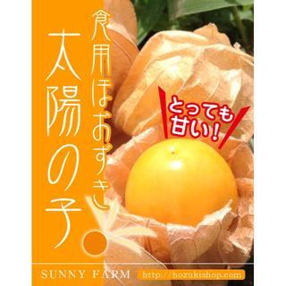 【スーパーフード】高糖度!食用ほおずき「太陽の子」の種10粒(野菜)