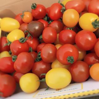 熊本産✳︎カラフルトマト✳︎ミニトマト✳︎減農薬(野菜)