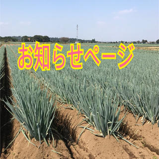 深谷ネギお知らせページ(野菜)