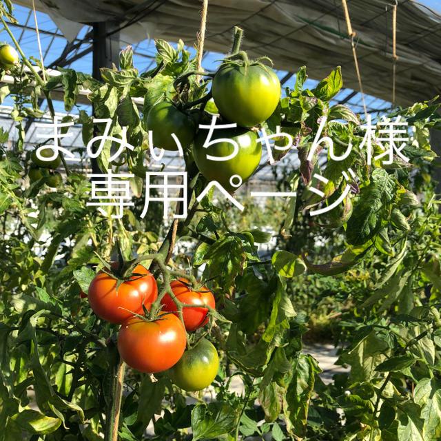 まみぃちゃん様専用 食品/飲料/酒の食品(野菜)の商品写真
