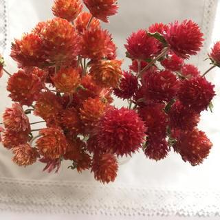 千日紅*赤&黄花ミックスドライフラワー(ドライフラワー)