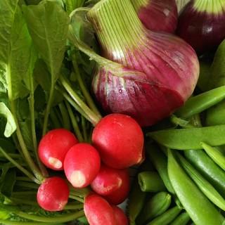 お任せ春の色々お野菜 野菜詰め合わせ(野菜)