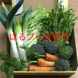 野菜セット S(野菜)