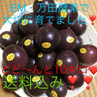 沖縄産パッションフルーツ【お得な10キロ】(フルーツ)
