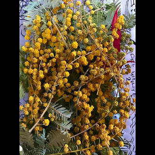ドライフラワー 花材 ミモザ レジン ハーバリウム アロマワックス 加工用(ドライフラワー)