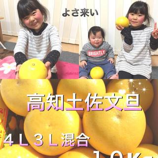 (あられパパ様専用)高知土佐文旦(大玉4L〜3L) 10kg ×4箱(フルーツ)