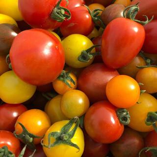 熊本産✳︎ミニトマト✳︎カラフルトマト✳︎ミックス✳︎減農薬(野菜)