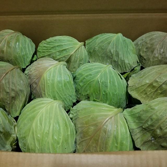 キャベツ 食品/飲料/酒の食品(野菜)の商品写真